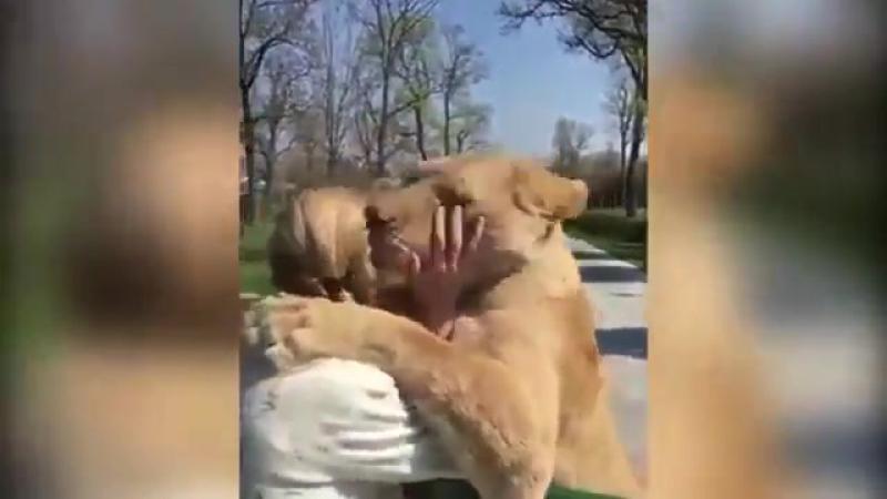 Видео с львицами, которые встретили