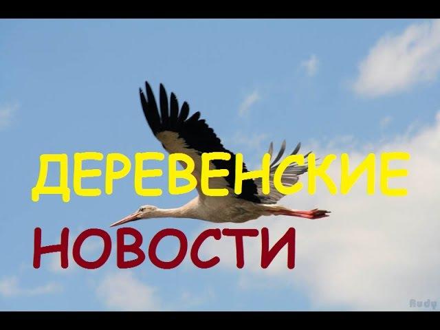 Деревенские новости:снова донаты/аисты/урожай/Рыжик.