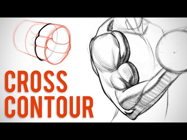Simplifying Arm Muscles with Cross Contour - Biceps Critique