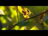 Sundance in 4k (Ultra HD)Видео Ультра Высокого Качества