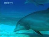 Jay Elder -- I'm A DolphinDubstep all I need