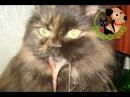 У кошки текут слюни. Возможные причины