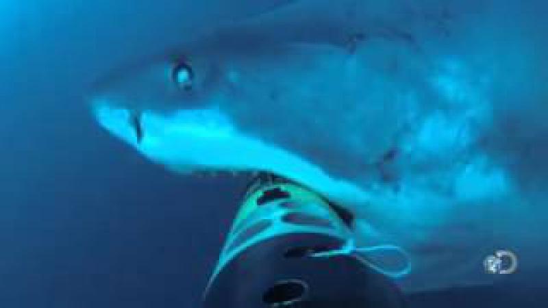 Eles Colocaram uma Câmera no fundo do Oceano... Até que um Tubarão Gigantesco Atacou