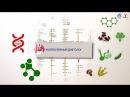 Медицинские профессии в будущем видеофильм для старшеклассников о профессиях...