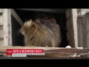 Київрада визнала вуличних котів частиною екосистеми міста