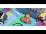 Hamster foodie quest by Little One (1)