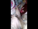 коты-извращенцы кототсос