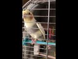 Говорящий попугай Рома