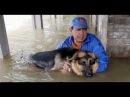 Hurricane Pet Rescue Animals saved from Hurricane Floods Hurricane