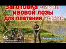 Заготовка ивовой лозы для плетения корзин ОСЕНЬ-ЗИМА/ лозоплетение