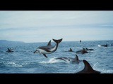 The ocean and us - BBC Earth, United Nations Ocean Conference