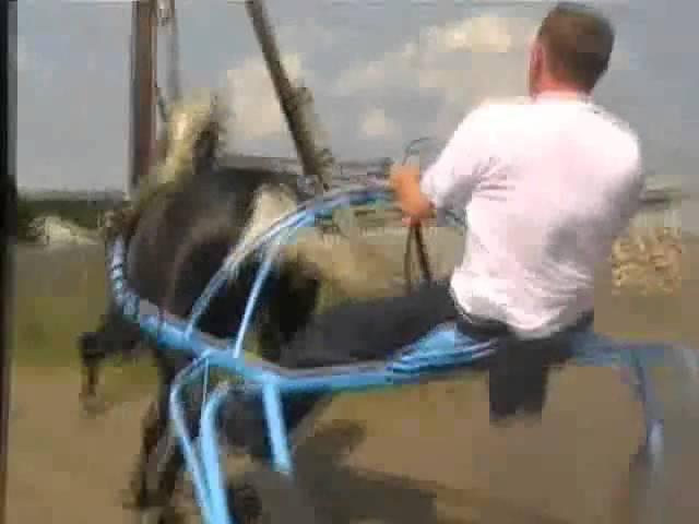 цыганский конь,Пегас ....хозяин Шалдыбин....( 89068838766)