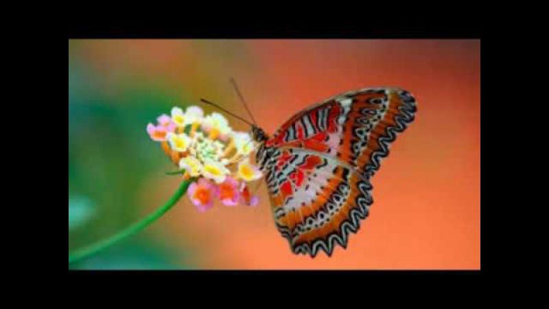 Живая Природа..Красівае Відіо за 14 мінут