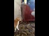 Кот-убийца! (6 sec)