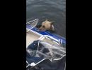Спасение тонущего медвежонка