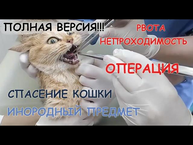СПАСЕНИЕ КОШКИ! ПОЛНАЯ ВЕРСИЯ! Рвота у кошки. ПРИЧИНЫ рвоты. Проглотила предмет, ОПЕРАЦИЯ, наркоз