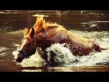 Сказки Одинокой Флейты - Ходят кони