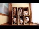 6つの箱と6匹の猫 Box and cat 201715 171107