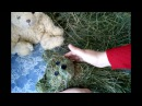 How to make a teddy bear with hay or dry grass. Игрушка из сена своими рукам