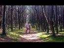Vladislav Shagan - Dancing Forest