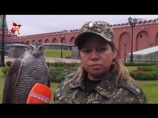 Как пернатые хищники охраняют Кремль
