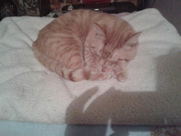 Срочно ищет дом молодой котик  кастрирован , к лотку приучен , не ест