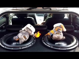 БАСики пошли в пляс :D Deaf Bonce 153 Басс в машину