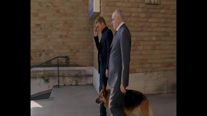 Комиссар Рекс 12 сезон 8 серия (134) Одинокий мужчина