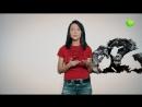 Живая Планета отвечает Какие обезьяны самые близкие родственники человека