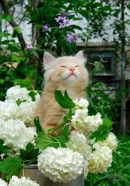 Чувствую запах весны))))