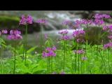 【4K】Весенний поток, Япония