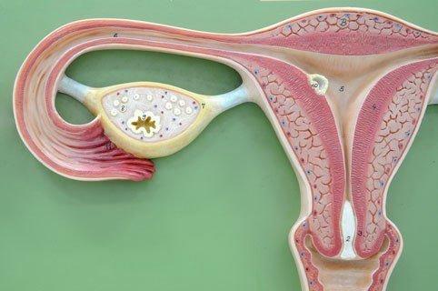 какие процедуры разрешены при аденомиозе