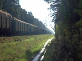 Лес везут поезда. Канск