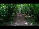 Тропинка в Гурьяновском лесу 6