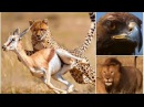 Выживание в саванне в мире животных дикая природа видео