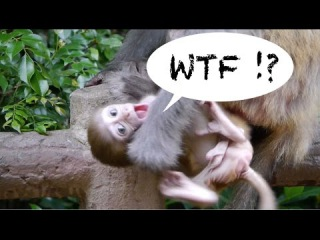 Rude and politically incorrect monkey clips