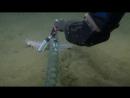 Сбор урожая ловля морских огурцов ориг. Testing the Soft Grip on a Sea Cucumber Nautilus Live