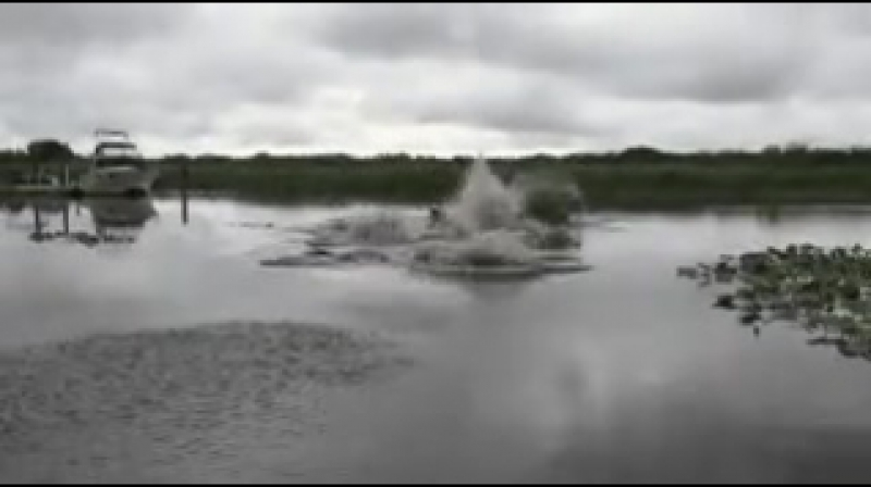 Прежде чем купаться в незнакомом озере, проверьте его! 😨