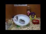 Happy hamster Show