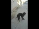 Vídeo mostra porque cachorros vivem pedindo link