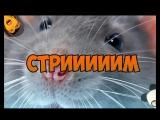 Стрем пошел twitch.tvnotactic1337