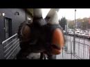 ЖИВЫЕ динозавры! Заходите посмотреть полное видео syoutu.be/dg2DeLBi84k