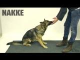 Как Собаки Реагируют На Фокусы