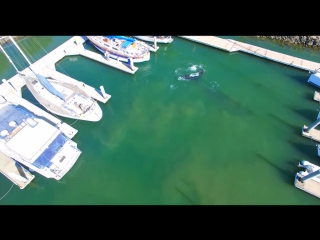 AERIALS Large HUMPBACK WHALE Confused Or Lost In Ventura Marina