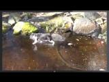 Троллинг кота - рыба подо льдом -  Trolling cat - fish under the ice.mp4