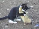 Котенок против утенка