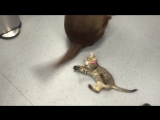 Котик везде игрушку найдёт