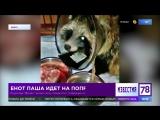 Под Петербургом поправляется енот, которого покусала стая собак