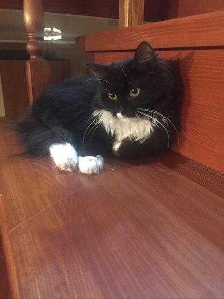 В Малышково, в частном секторе, пропала кошка (выбежала из дома и скры