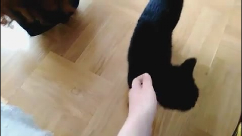 мрр~ наш кот Салем~